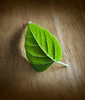 greenleaf2